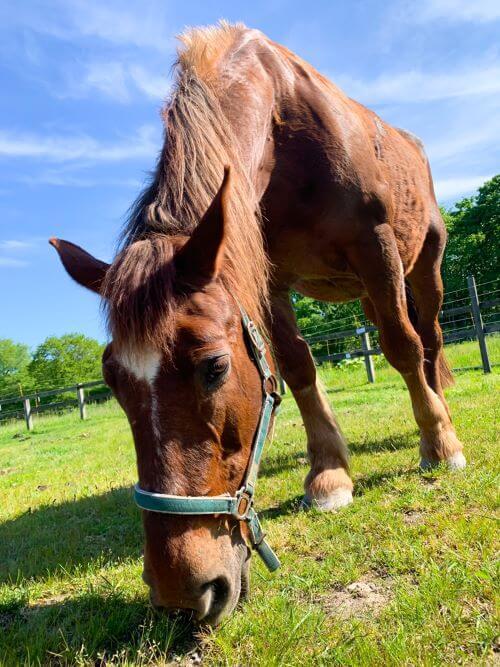 白老 ホースフレンドファーム 養老牧場 引退馬 体験乗馬 引馬 外乗 預託