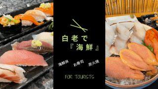 白老 海鮮 海鮮丼 炭火焼 寿司